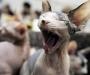 The Sphinx Cat