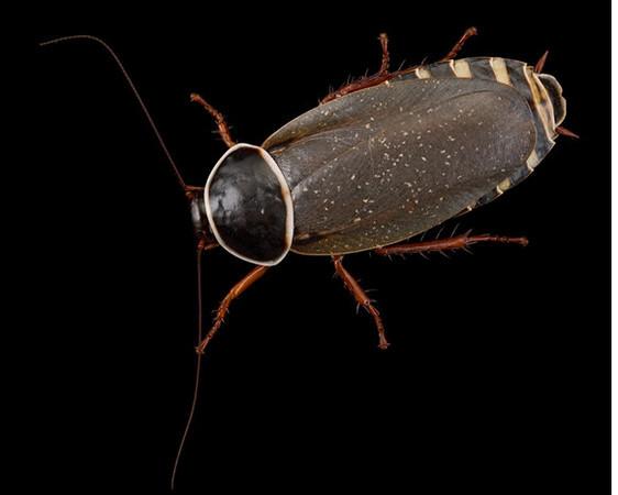 15 Cucaracha Conservation International