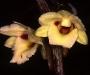 290 nuevas especies de plantas