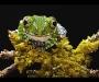 Fotografía de una rana de Simon RobertsFotografía de una rana de Simon Roberts