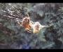 Avispa deborada por araña de Takeo Broadhurst