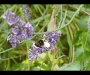 Araña cangrejo comiendo un abejorro de Tim Protheroe