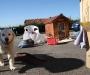 07 DIY: Casas de aperos y caseta de perro