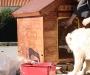 08 DIY: Casas de aperos y caseta de perro