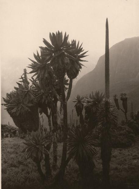 El Valle de Bujutu, Uganda, 1927