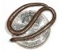 Leptotyphlops carlae. Serpiente hilo de Barbados. La más pequeña del mundo con 10 cm.