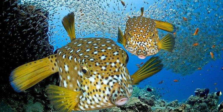 """02 Concurso \""""Fotografía bajo el agua\"""" de the British Society of Underwater Photographers"""
