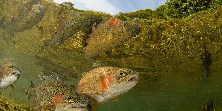 """04 Concurso \""""Fotografía bajo el agua\"""" de the British Society of Underwater Photographers"""