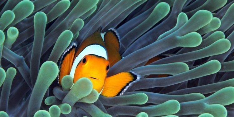 """05 Concurso \""""Fotografía bajo el agua\"""" de the British Society of Underwater Photographers"""