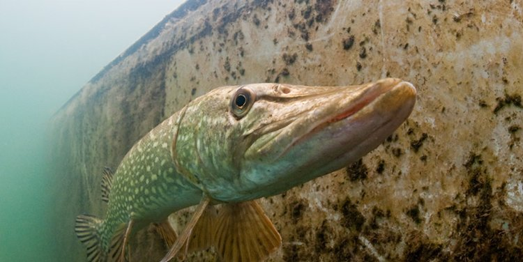 """06 Concurso \""""Fotografía bajo el agua\"""" de the British Society of Underwater Photographers"""