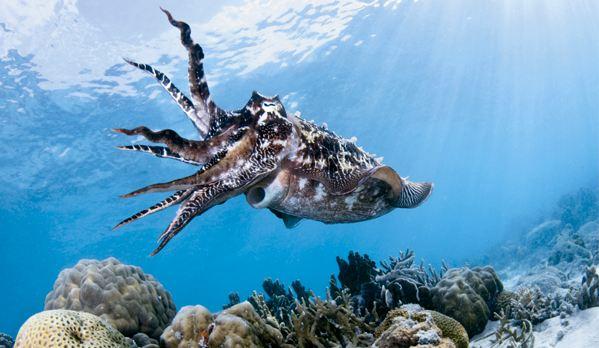 """10 Concurso \""""Fotografía bajo el agua\"""" de the British Society of Underwater Photographers"""