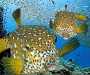 """02 Concurso """"Fotografía bajo el agua"""" de the British Society of Underwater Photographers"""