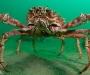 """03 Concurso \""""Fotografía bajo el agua\"""" de the British Society of Underwater Photographers"""