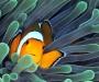 """05 Concurso """"Fotografía bajo el agua"""" de the British Society of Underwater Photographers"""