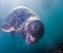 """09 Concurso """"Fotografía bajo el agua"""" de the British Society of Underwater Photographers"""