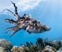 """10 Concurso """"Fotografía bajo el agua"""" de the British Society of Underwater Photographers"""