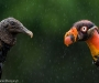 03 Wildlife Photographer of the Year,