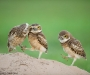 04 Wildlife Photographer of the Year,