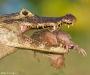 05 Wildlife Photographer of the Year,