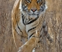 07 Wildlife Photographer of the Year,