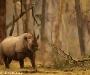 08 Wildlife Photographer of the Year,