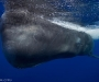 10 Wildlife Photographer of the Year,