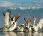 11 Wildlife Photographer of the Year,