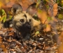 12 Wildlife Photographer of the Year,