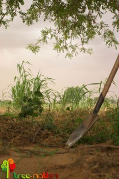Acacia Senegal vooLive.net en Niger