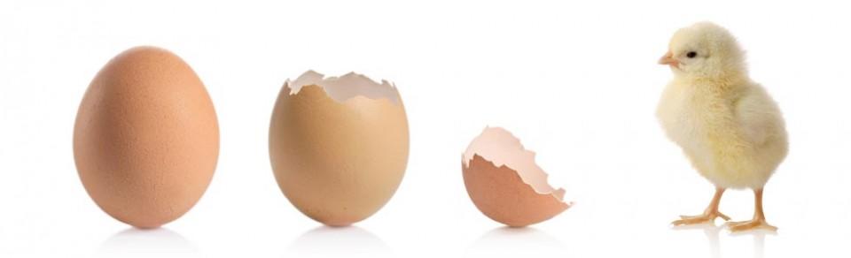 El huevo y la gallina