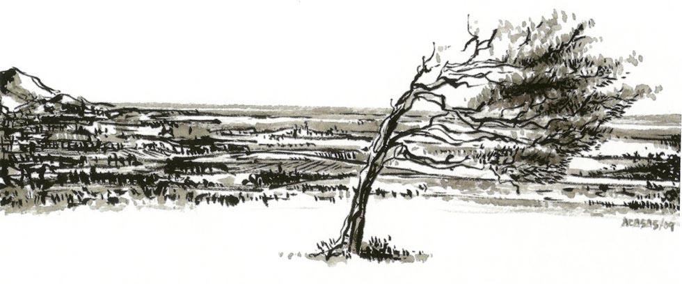 Interpretación del árbol torcido de Tamaraceite. Dibujo de Ángel Casas