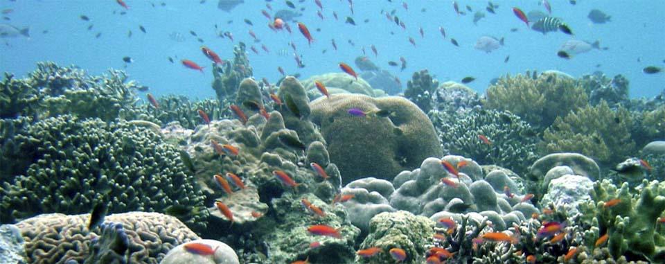 Incremento de acidez de los océanos
